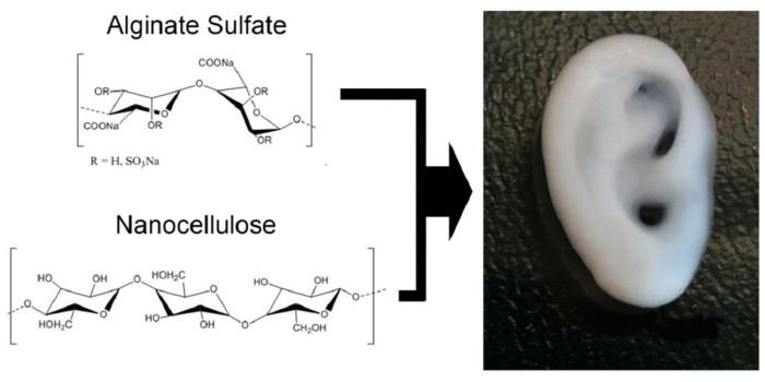 Ved å blande sulfatert alginat med nanofibre av cellulose får vi et materiale for 3D-printing av stillasmaterialer sammen med celler. Foto: Michael Müller (ETH Zürich)